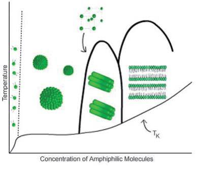 Concentration of Amphiphilic Molecules